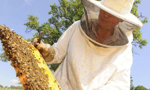 Die Erwerbsimker hoffen immer noch, dass die liberale Bienenhaltung im Tal gestattet wird