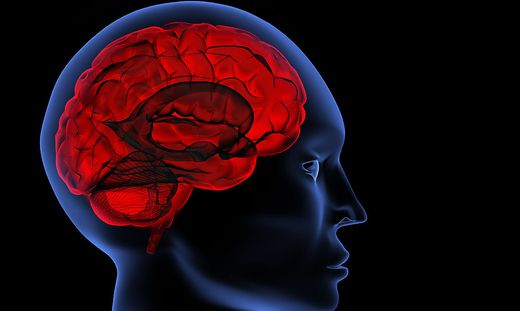 Einblicke ins Gehirn