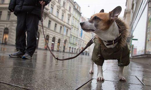 Ab 2019 zahlt man in Graz keine Hundesteuer mehr