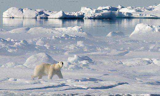 Zwischenfall in Norwegen: Eisbär greift Kreuzfahrer auf Spitzbergen an