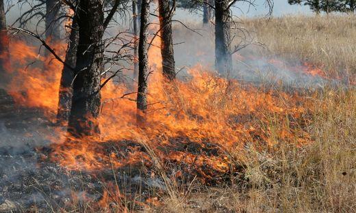 Südfrankreich: Urlauber vor Waldbränden in Sicherheit gebracht