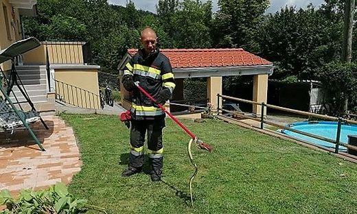 Die Feuerwehr kümmerte sich um das Tier
