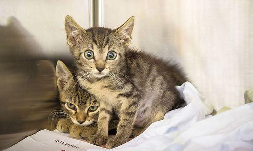 Diese beiden Katzen und 21 weitere wurden in einer Box gefunden