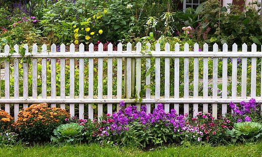 Blühender Grundstücksrand: Ein Zaun ist Grenze und Kontaktzone