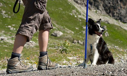 Der Mann war mit seinem Hund unterwegs (Symbolfoto)