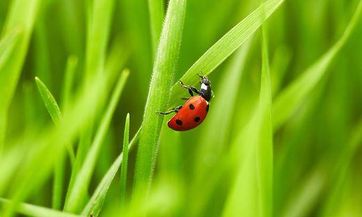 Der Inbegriff des Frühlings: grünes Gras