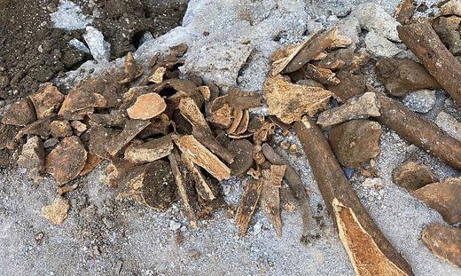 Bei den Knochen handelt es sich um Überreste von zumindest vier Menschen