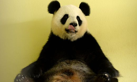 FRANCE-ZOO-ANIMAL-PANDA