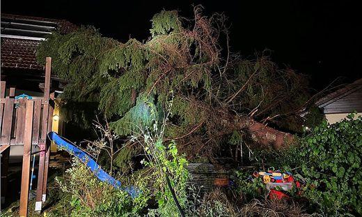 Auwaldgasse: Baum krachte in den Garten eines Einfamilienhauses - verletzt wurde zum Glück niemand