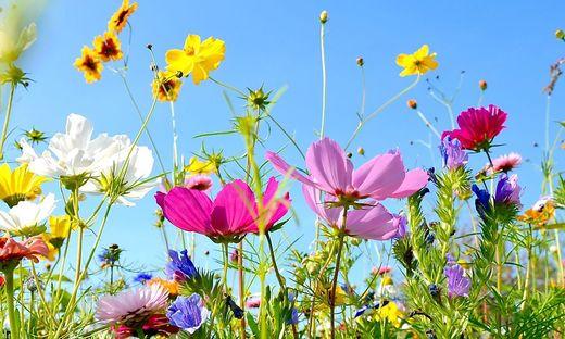 Wie riecht der Sommer: Nach Blumen, Obst und nicht selten auch nach Biomüll
