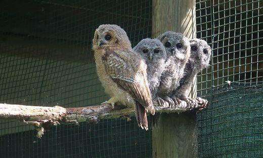 Vier der fünf Jungtiere