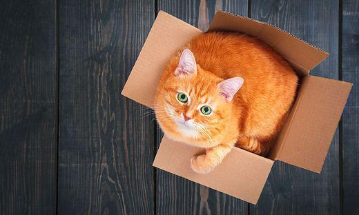 gute frage warum die katz die kiste liebt. Black Bedroom Furniture Sets. Home Design Ideas