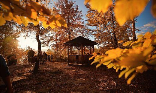 Herbst Wald Wandern Kreuzbergl Zill Hoehe goldener herbst