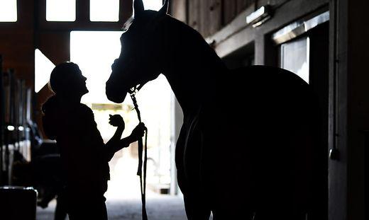 Warum die Pferde ausbrechen konnten, ist noch unklar