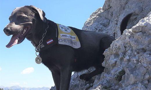 Die sechs Jahre alte Labrador-Hündin Cheyenne hat eine ausgezeichnete Spürnase