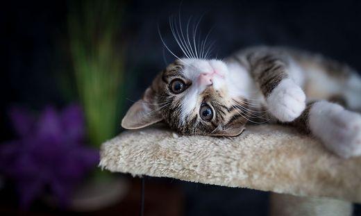 Eine Katze wurde in Reifnitz vergiftet. Auch andere Tierbesitzer berichten von Vorfällen.