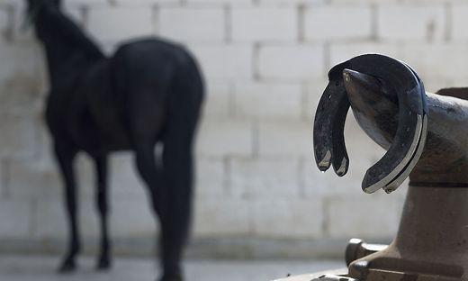 Pferd und Hufeisen (Archivbild)