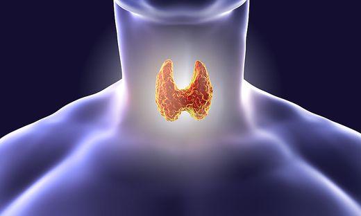 Thyroid gland illustration