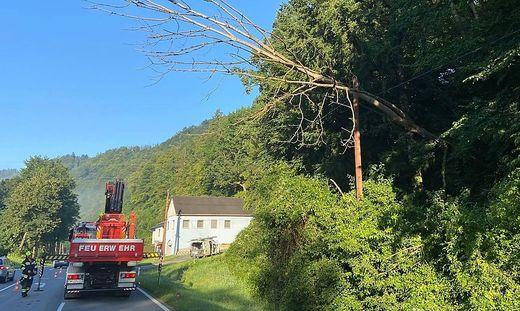 Gemeinsam gelang es den umgestürzten Baum abzutragen