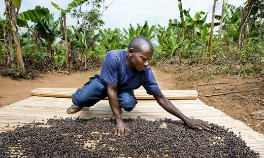 Kaffeebauern: Produktionskosten über Verkauferlösen