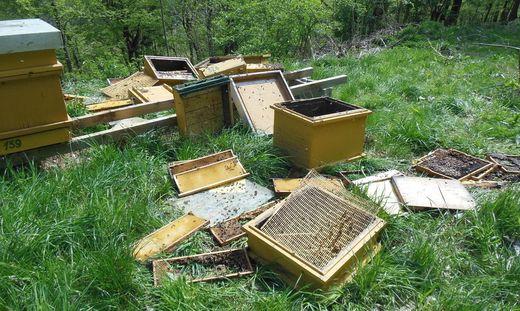 Bei diesen Bienenstöcken am Kogelberg bei Leibnitz dürfte der Bär seinen Hunger gestillt haben