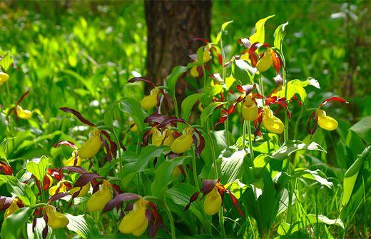 Orchideen Selber Pflanzen Lust Auf Exoten Im Eigenen Garten Kleinezeitung At