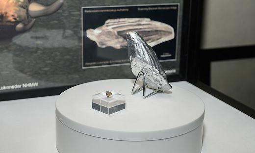 Pliosaurier wird erstmals ausgestellt