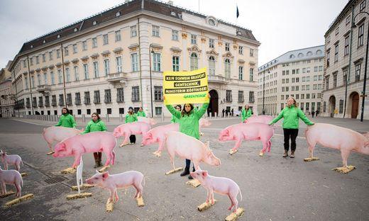Greenpeace-Protest gegen Gentechnik in AMA-Schweinefleisch