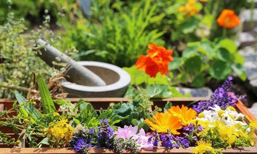 Kräutergarten mit Kräutermörser und Blumen