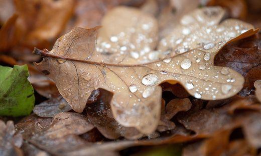 Herbstliches Blatt