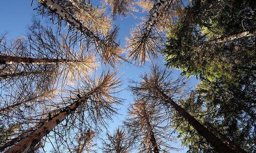 Ein bereits geschädigter Wald