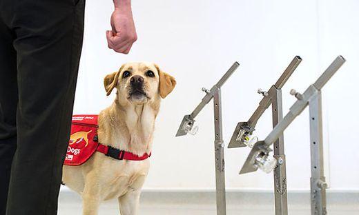 Ein Hund der Medical Detection Dogs