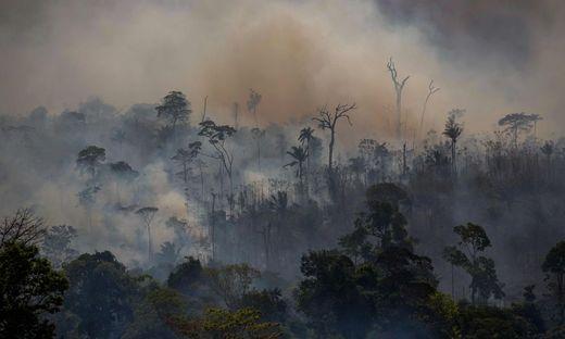 Große Flächen des brasilianischen Regenwaldes wurden ein Raub der Flammen