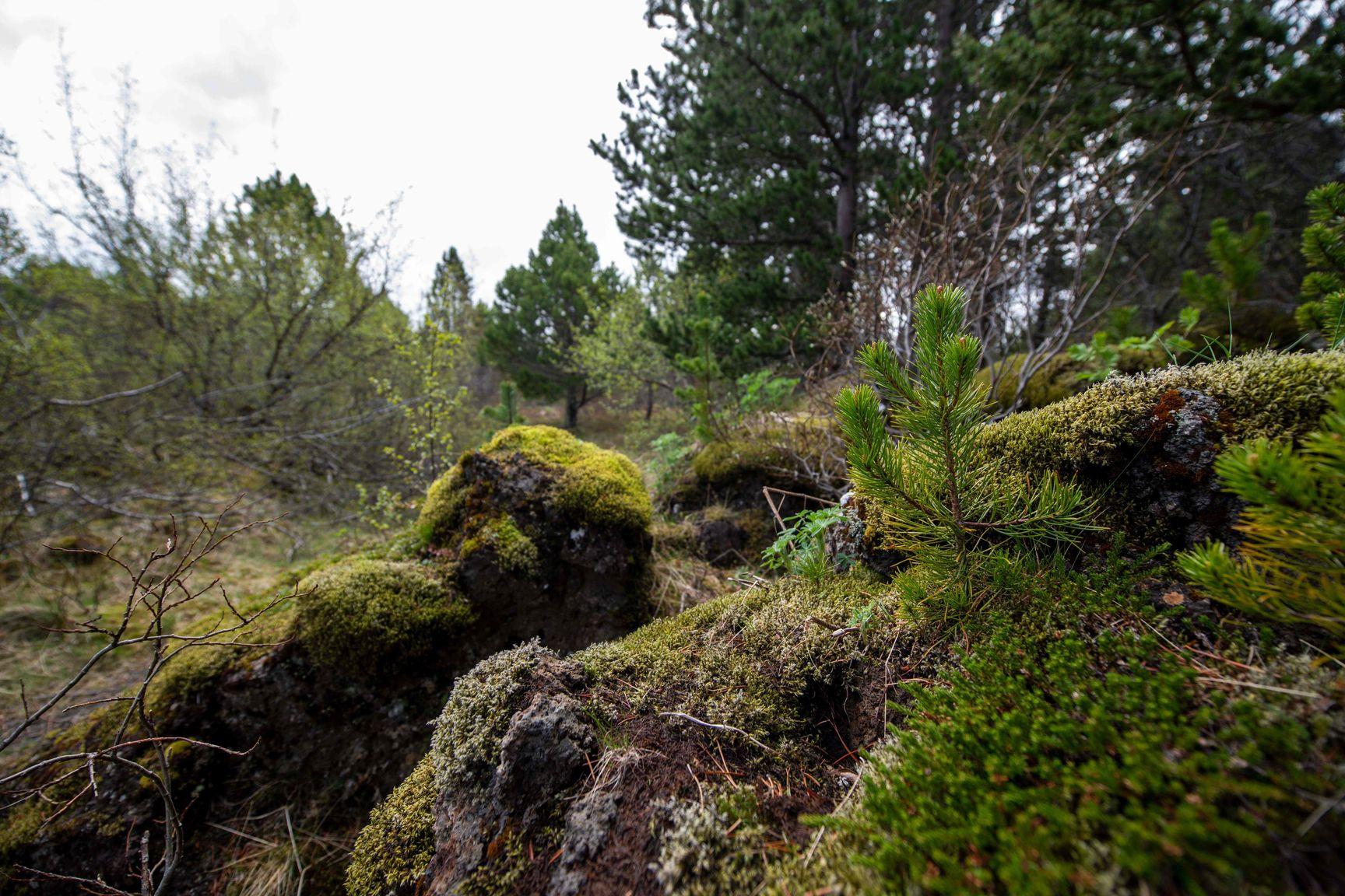Bäume Island