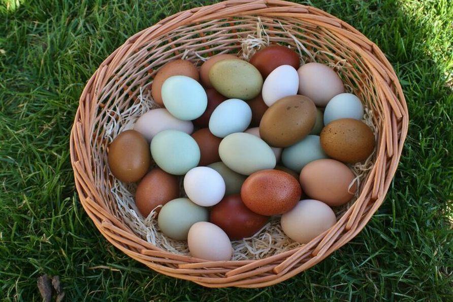Eierfarbe Hühner