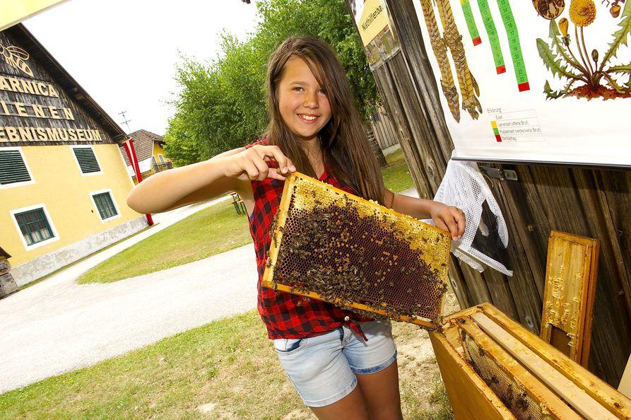 Summ Summ: Carnica Bienenmuseum feierte 20 Jahre « kleinezeitung.at