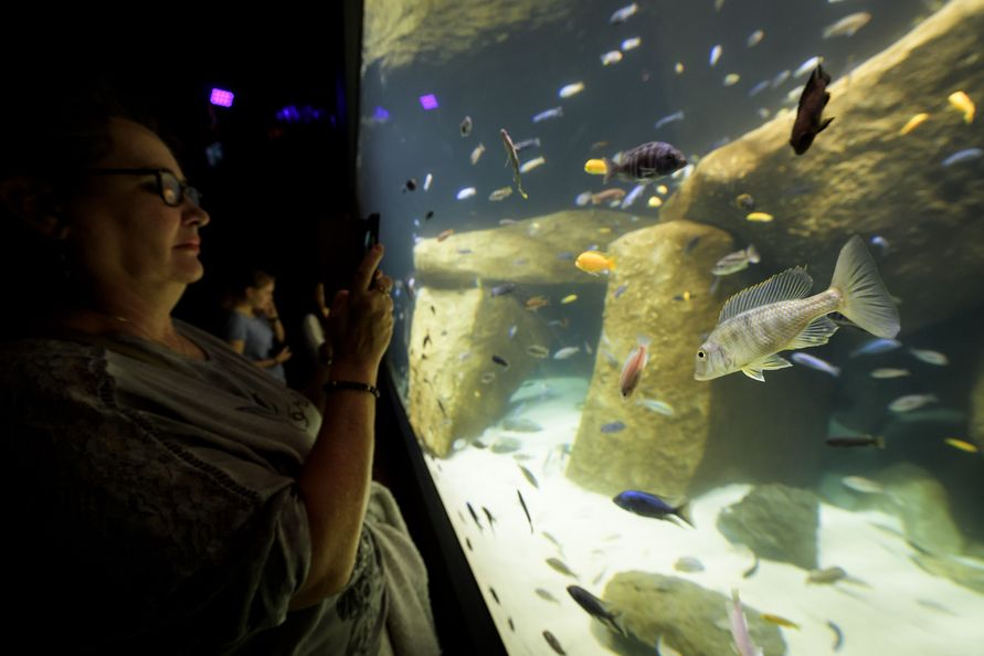 lausanne gr tes s wasser aquarium europas er ffnet. Black Bedroom Furniture Sets. Home Design Ideas