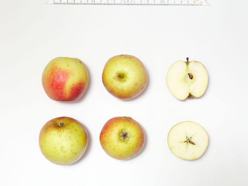 Boom Bei Alten Obstsorten: Hier Können Sie Äpfel Mit