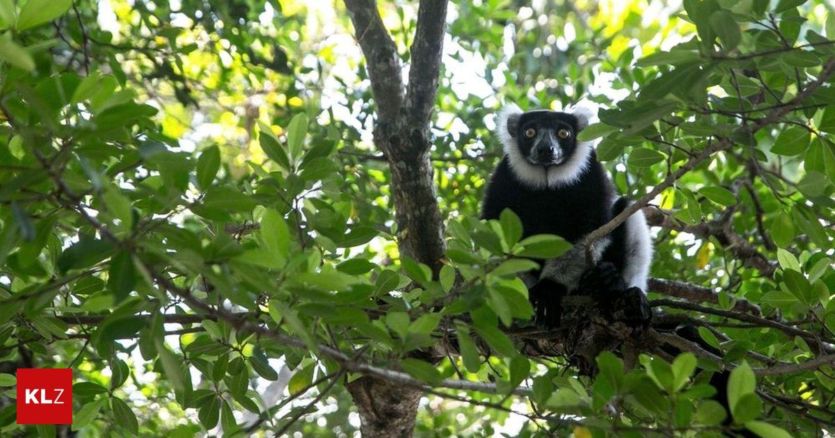 Artenschutz-Konferenz : Zerstörung der Artenvielfalt bedroht Menschen genauso wie Klimawandel