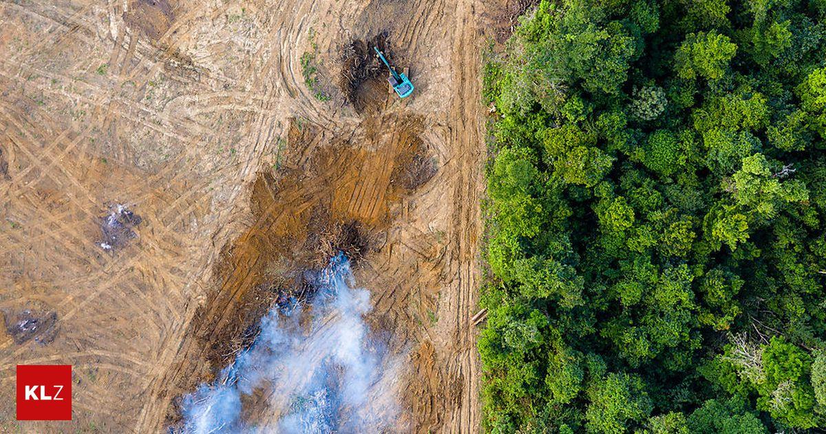 Sauerstoffbörse: Brasilien will Sauerstoff des Amazonas verkaufen