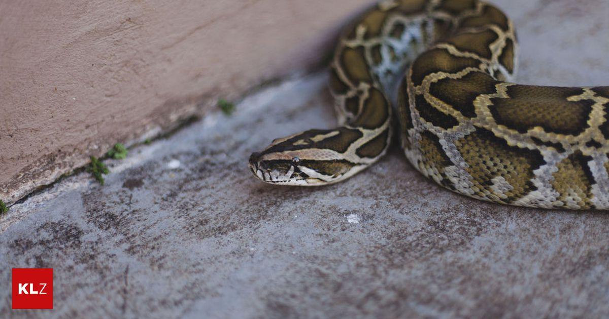 Python Opas